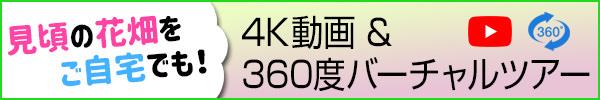 4K動画&360度バーチャルツアー 〜見頃の花畑をご自宅でも〜