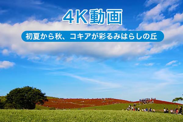 4K動画 コキア編