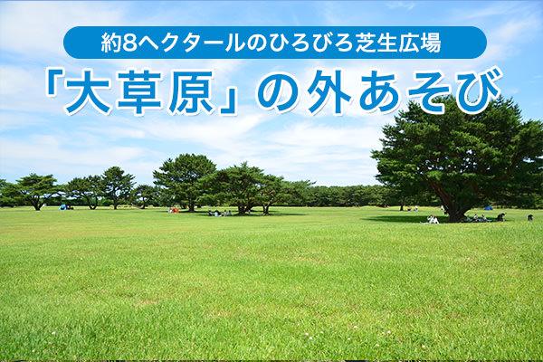 約8ヘクタールのひろびろ芝生広場「大草原」の外あそび完全ガイド