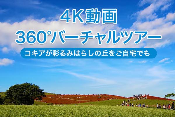 コキア in 4K動画&360度バーチャルツアー