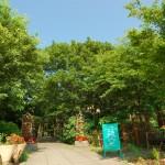 記念の森レストハウス (4)