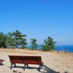 砂と海の林