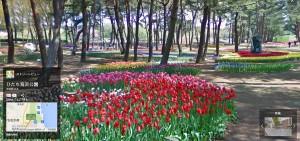 チューリップの咲くたまごの森(Googleストリートビューより)