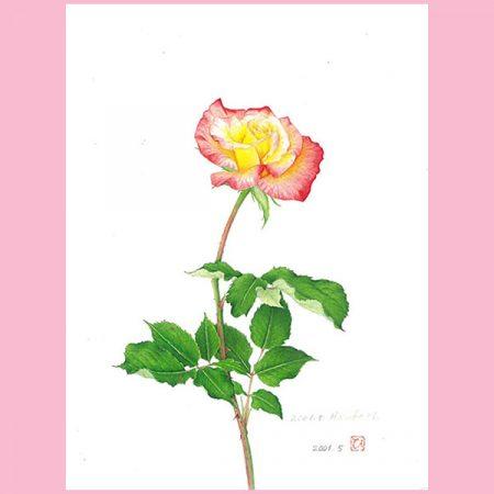 ボタニカルアートで花を描こう