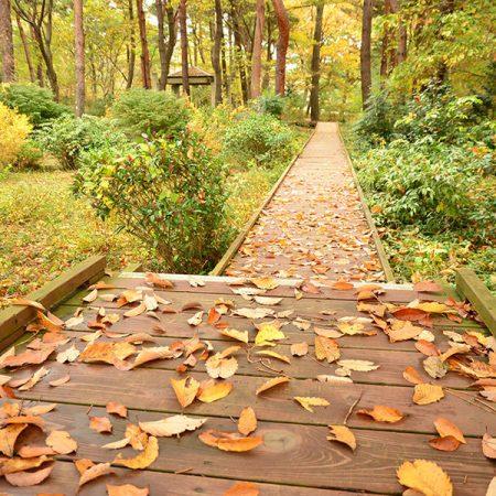 記念の森散策路