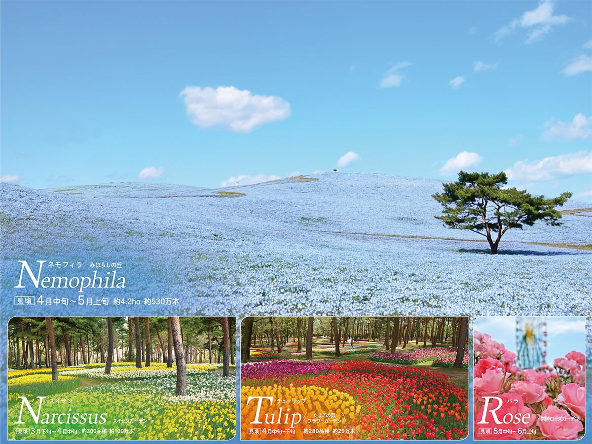 flowering2021